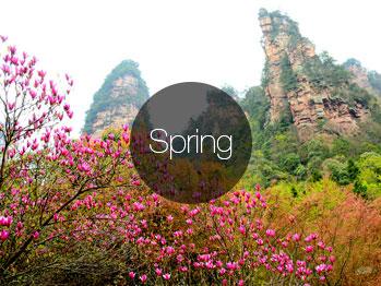 China Spring